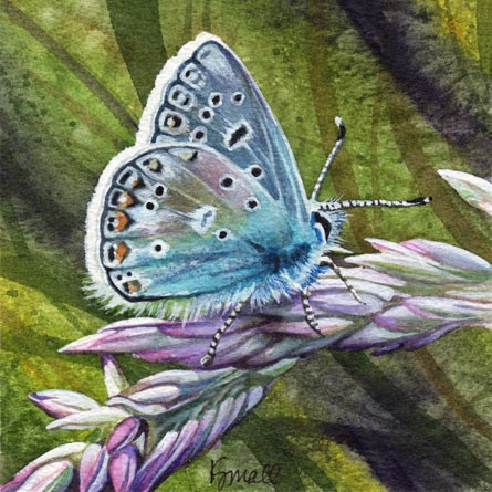Mothy Blue Butterfly