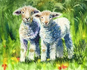 Lambs in watercolor