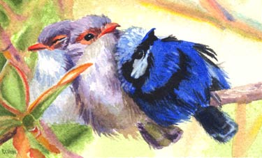 Three Fairy Wrens